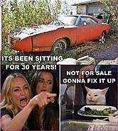 Click image for larger version.  Name:cat car.jpg Views:207 Size:131.5 KB ID:454206